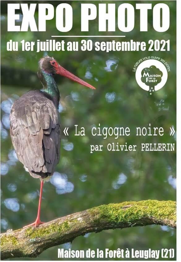 Une exposition de photographies sur la cogogne noire aura lieu à la Maison de la Forêt