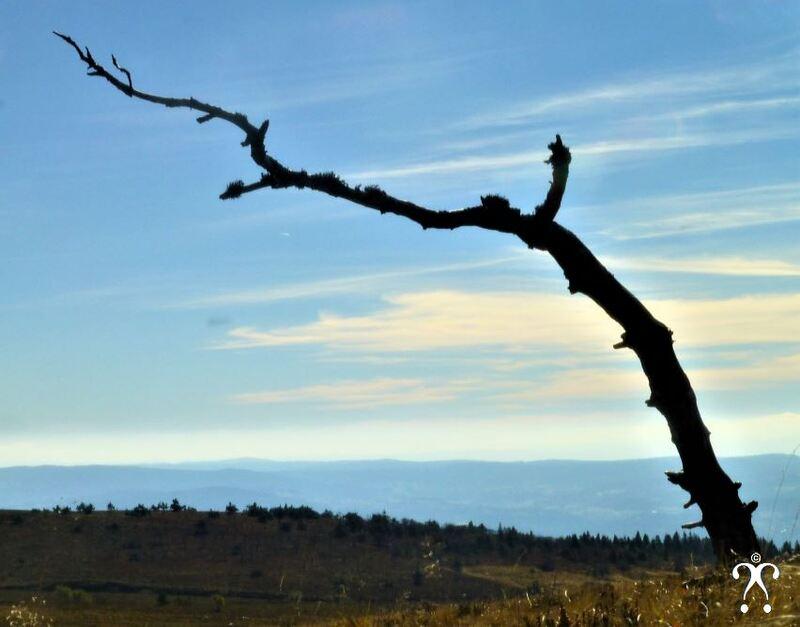 L'arbre au foulard