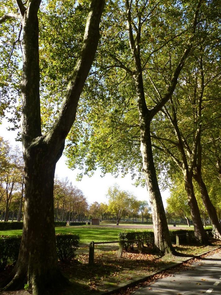 Le soleil et moi au Parc de la Hotoie