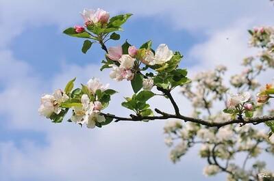 20 mars : c'est le printemps !