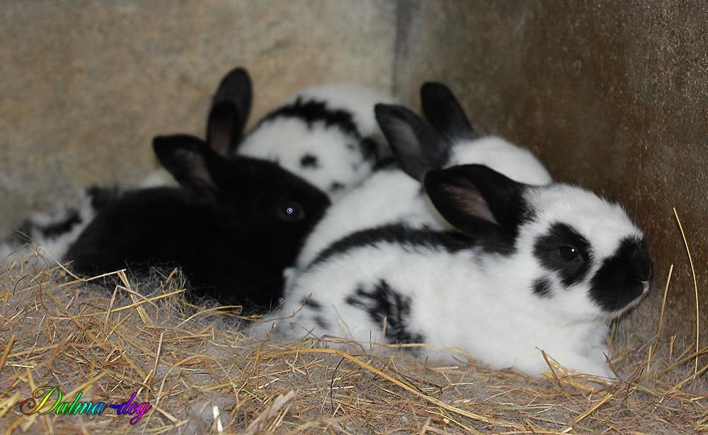 mes bébés lapins