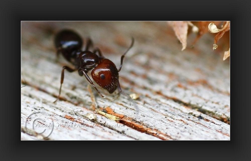 Monde des fourmis, encore bien présent en novembre...