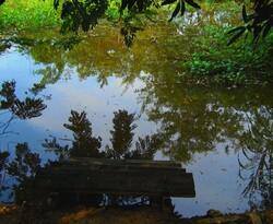 Le monstre de l'étang...