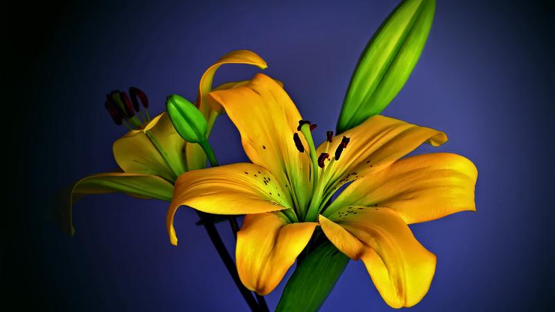 20 images de fleurs #3