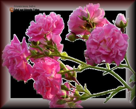 Tube fleurs 2914