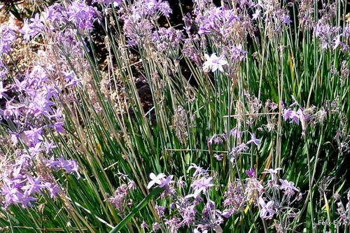 Perpignan : de belles fleurs