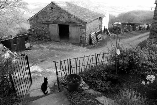 11- Des chats  encore