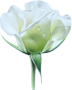 hommage à ceux qui ont perdu la vie à cause de la bétise humaine