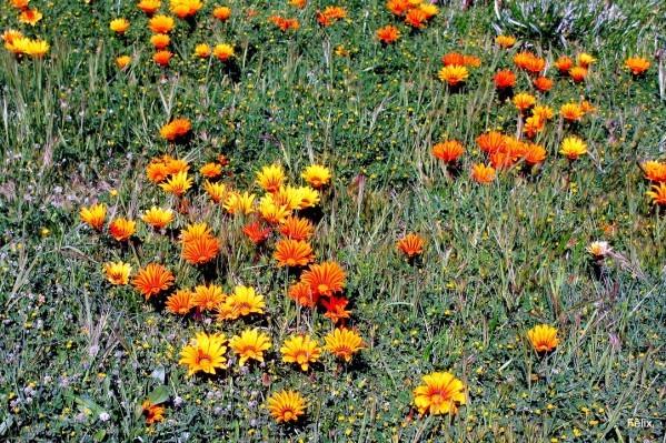 n04---De-belles-fleurs.JPG