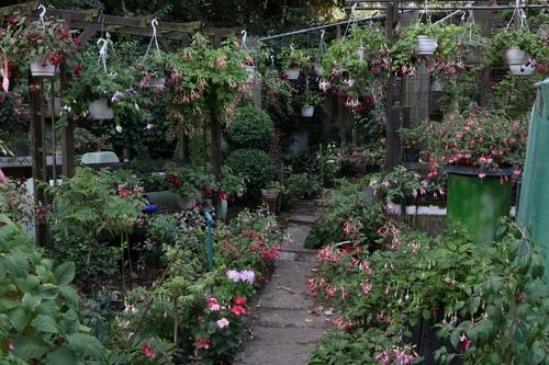 Visite cet été chez un grand collectionneur,fan de fuchsia,ma fleur préférée.