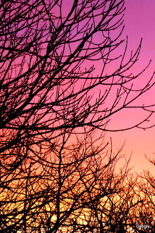 Soleil du matin dans le bois
