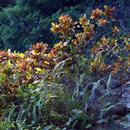 Déboulé de croton au soleil couchant (Habitation Latouche) - Photo : Karin