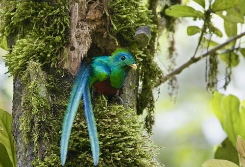 Vidéo du Costa Rica