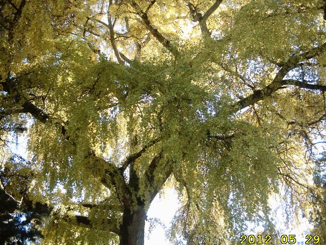 au couleur de l'automne