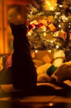 Chats et chiens à Noël