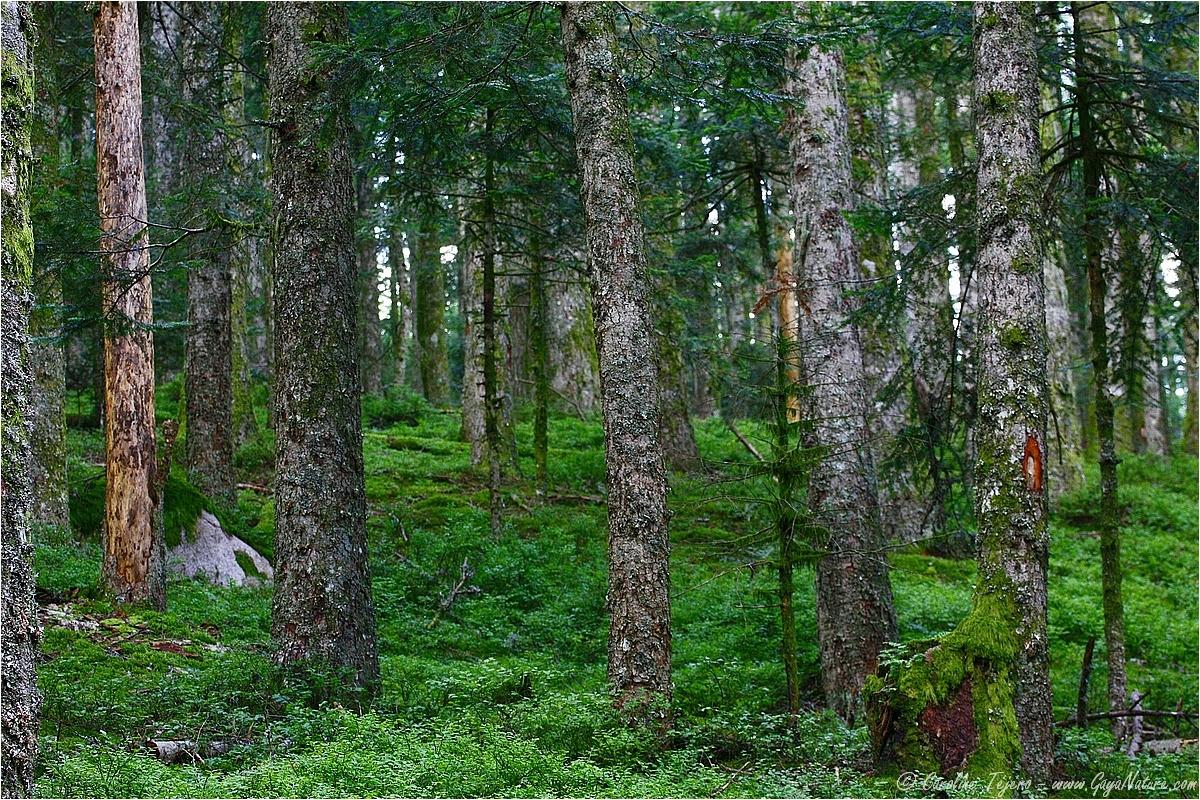 Col Saint Thomas, Bois Noirs (Auvergne, Loire)