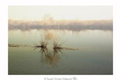 Camargue dans le brouillard