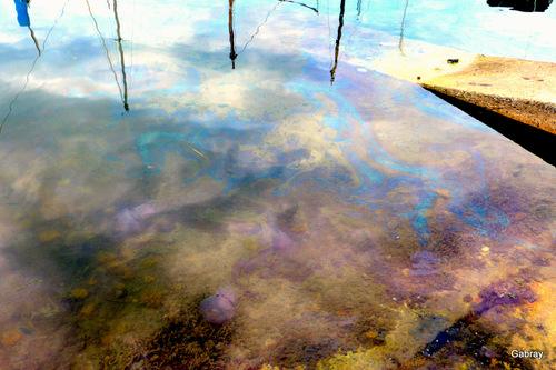 Au port Barcarès: méduses et gazole!