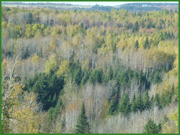 Paysages dans la forêt. (3)