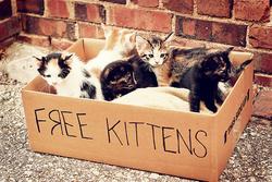 Cat'spiration!!! moi aussi je suis une blogueuse à chats <3