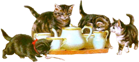 Humour avec des Chats