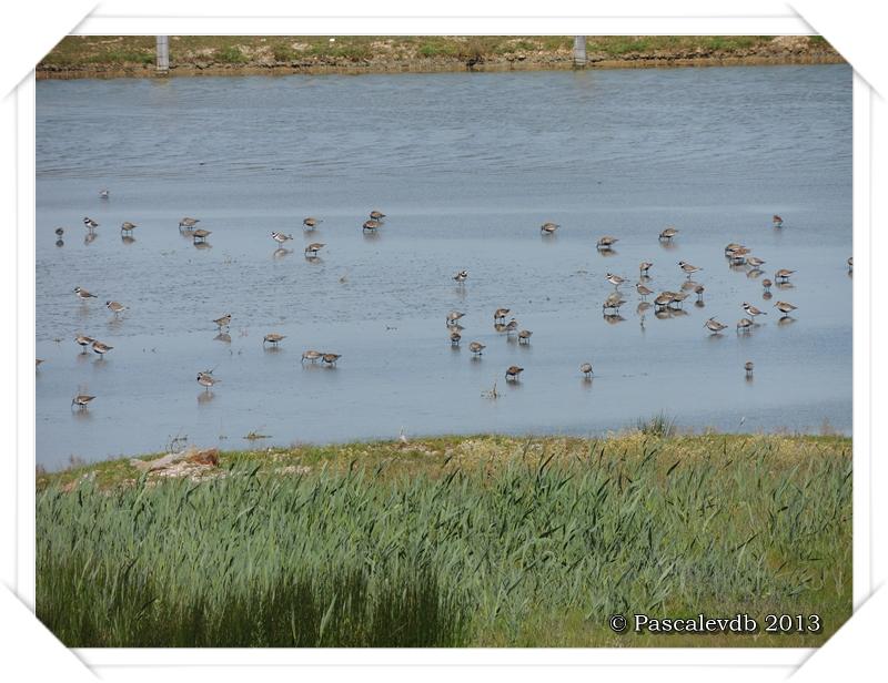 Printemps à la réserve ornitho du Teich - 10/16
