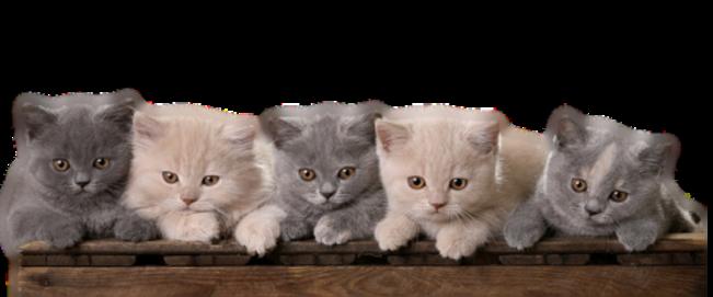 Tube barre de séparation chatons