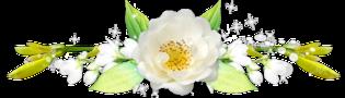 ♥ Fleur d'Orchidée ♥