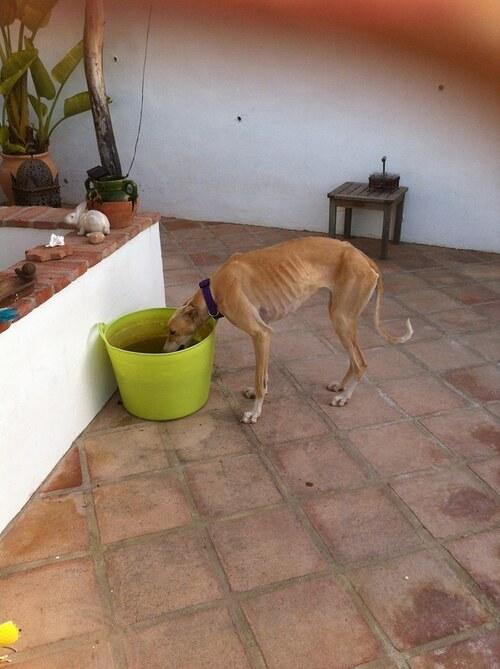 """Une amie bénévole en Espagne a ramassé cette """"misère""""..."""