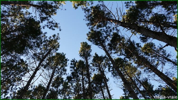 Une après-midi en forêt. 9! de5)