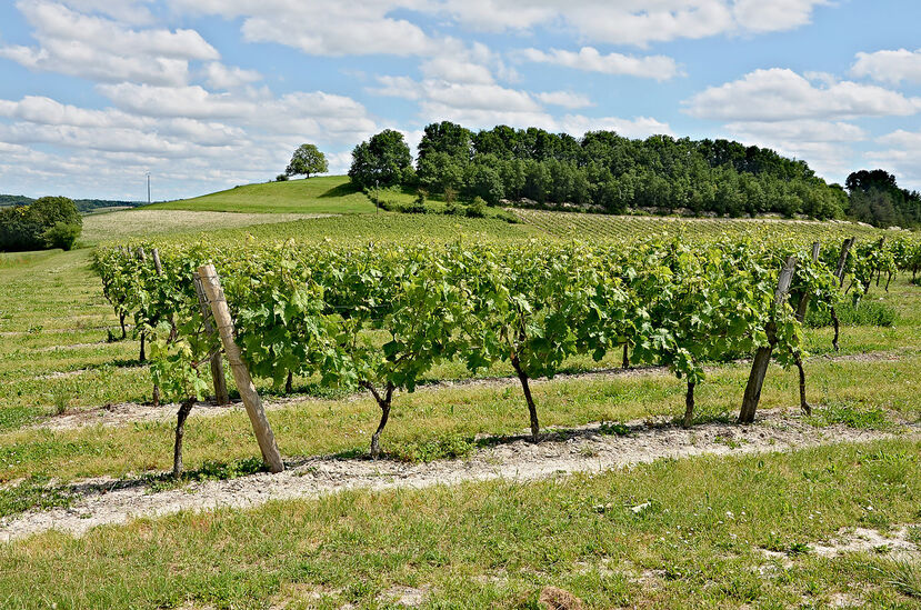 Mainfonds 16 Colline&vignoble 2013.jpg