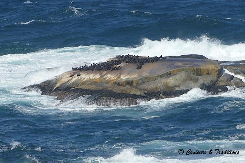 Ile aux phoques