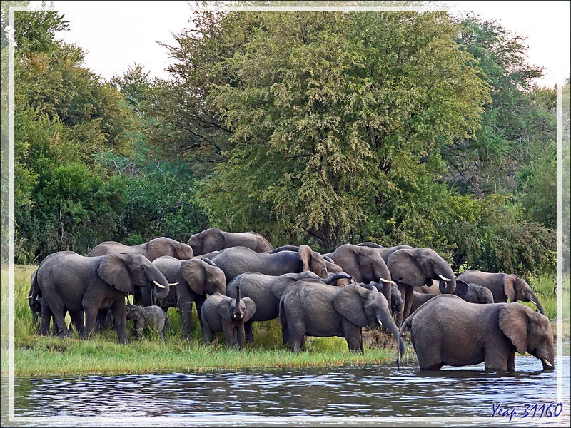 Fin de notre balade nautique sur le Fleuve Zambèze - Zimbabwe