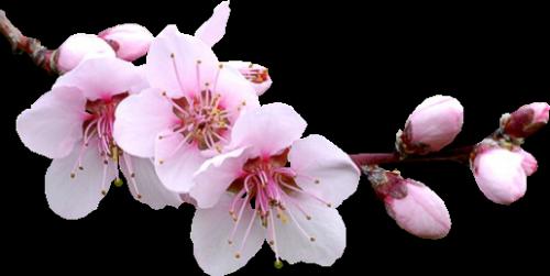 Bon printemps à tous