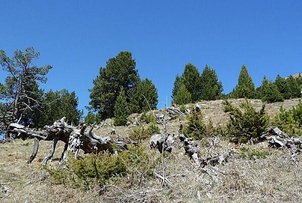 0 P Andorre (7)