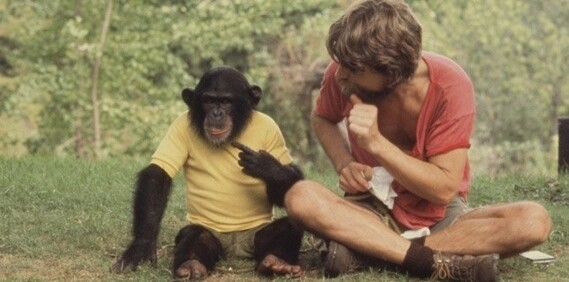 Les singes et le langage.
