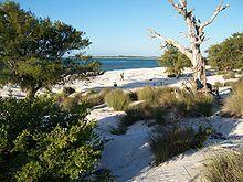 Photographie montrant la végétation dunaire au nord de l'île Europa
