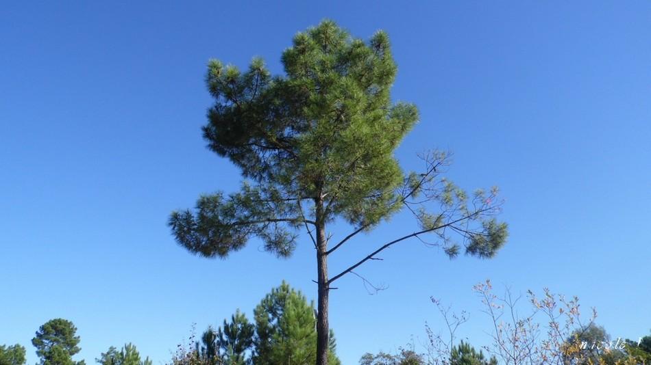 Auprès de mon arbre ...