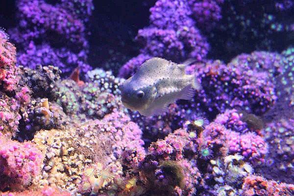 fond marin aquariumLR3