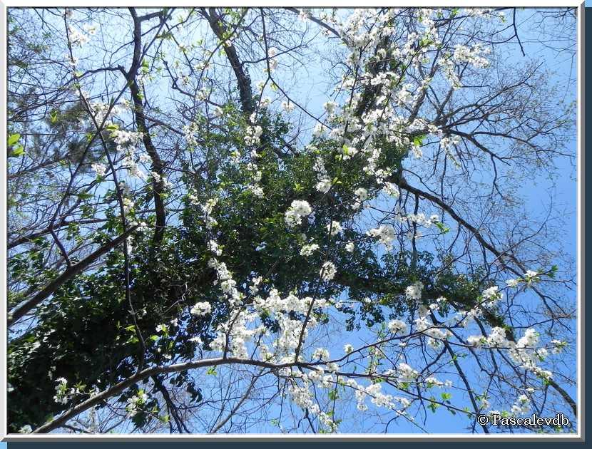 Je bourgeonne, tu éclos, elle fleurit, on revit ... c'est le PRINTEMPS !!!