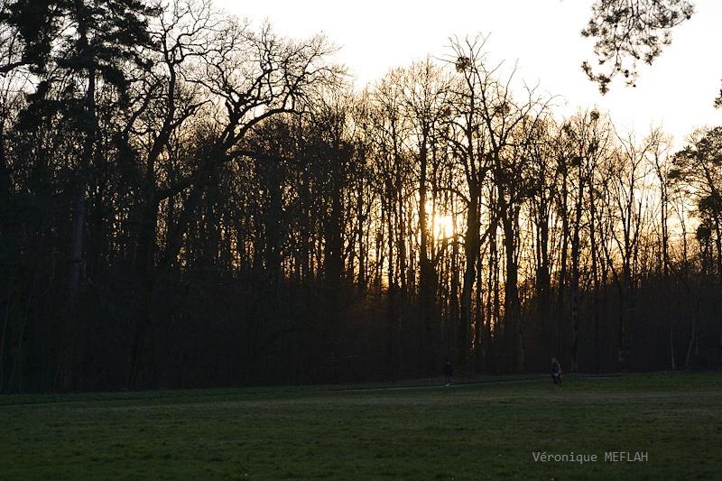 Coucher de soleil en forêt de Rambouillet