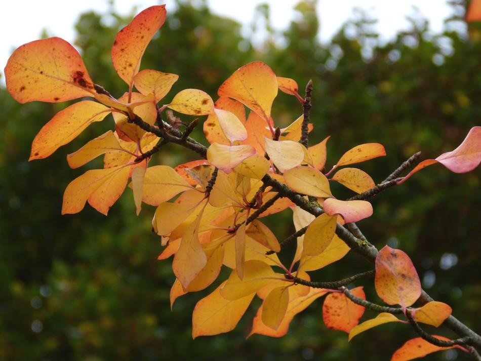 Trésors d'automne chez Anniclick