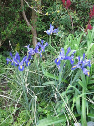Mes-fleurs-et-le-potager-3013.JPG