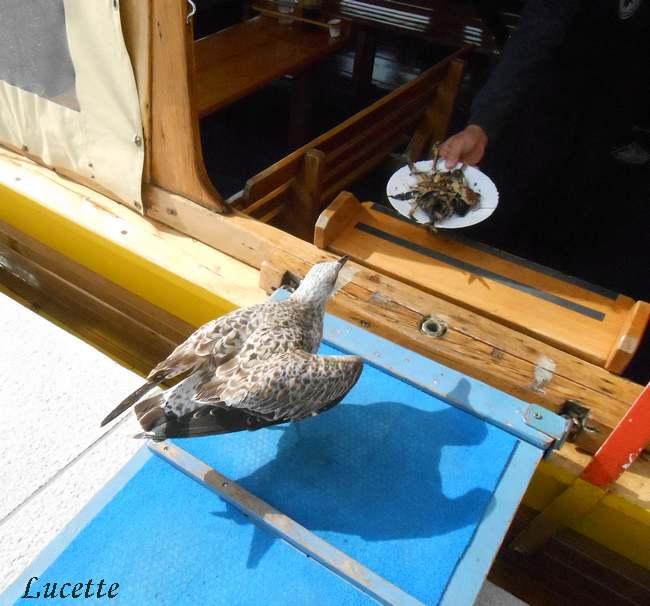 Séjour croate : Excursion sur l'île de Cres