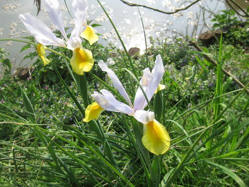 Défi n° 275 : 1er mai : que des fleurs blanches