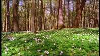 Printemps / Forêt / Pologne | HD Stock Video 116-561-626 ...