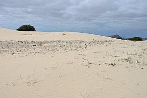 désert de viana6