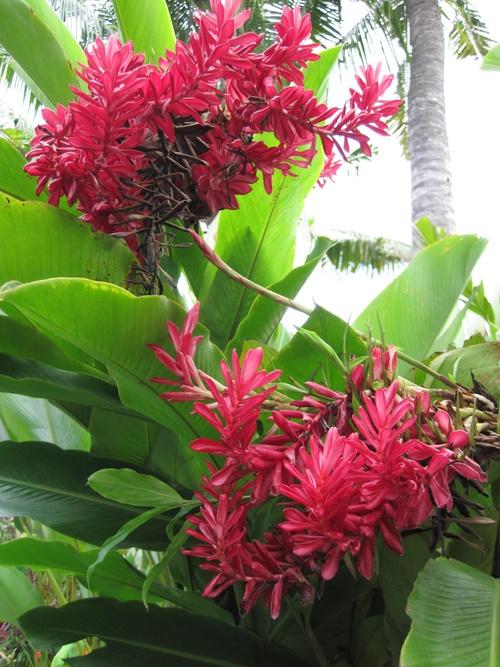 Faune et flore balinaises