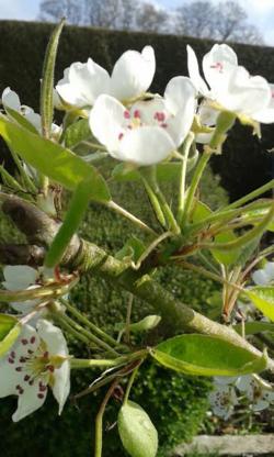 Joie du printemps