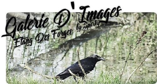 19/04/2018 : Ballade à l'Etang des Forges. (Avec Galerie d'images)